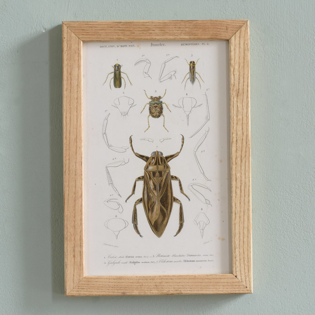Original engravings of Insects published c1845-0