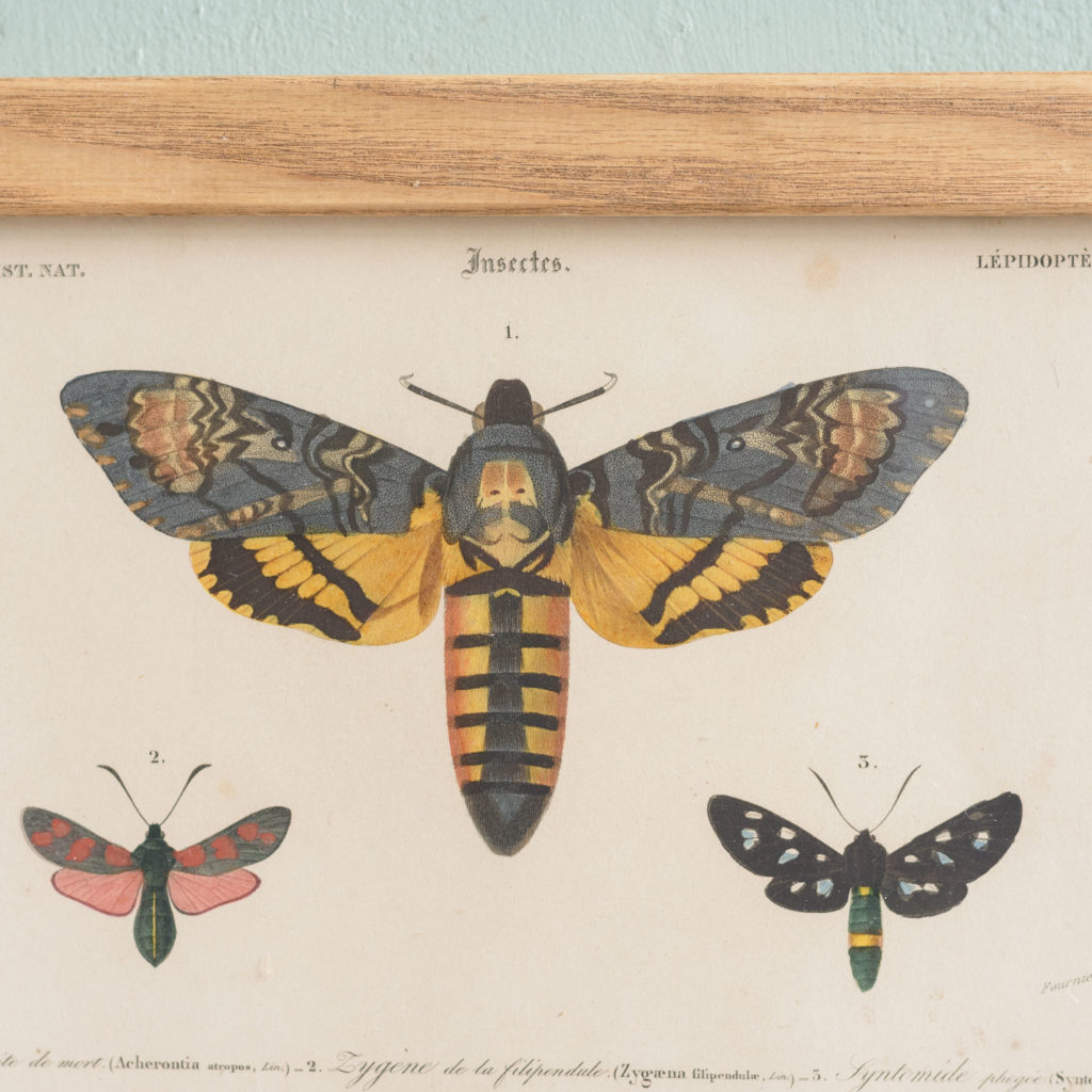 Original engravings of Insects published c1845-109760