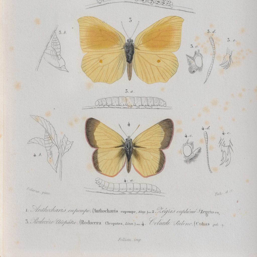 Original engravings of Insects published c1845-109717