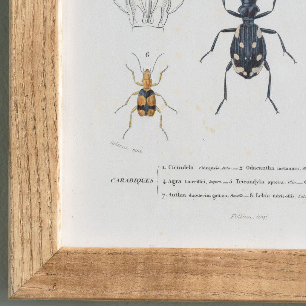 Original engravings of Insects published c1845-109706
