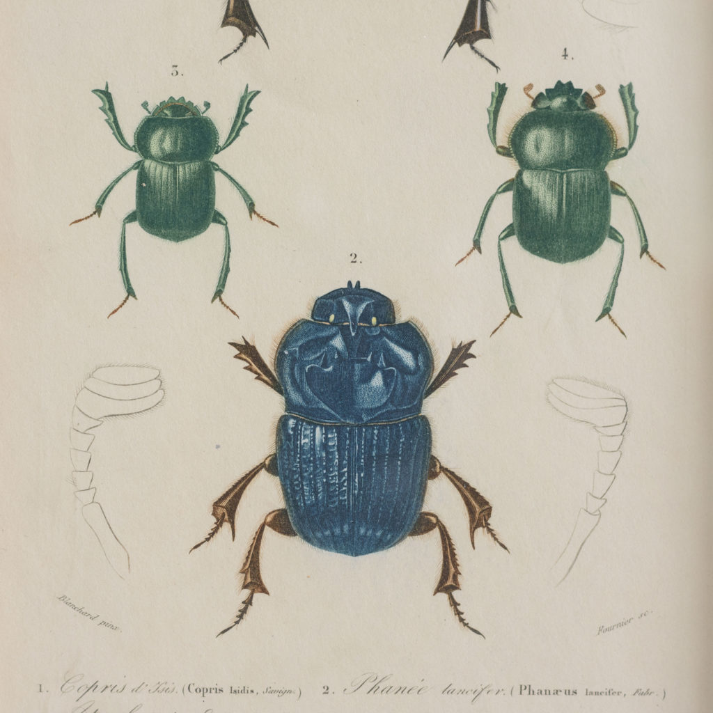 Original engravings of Insects published c1845-109685