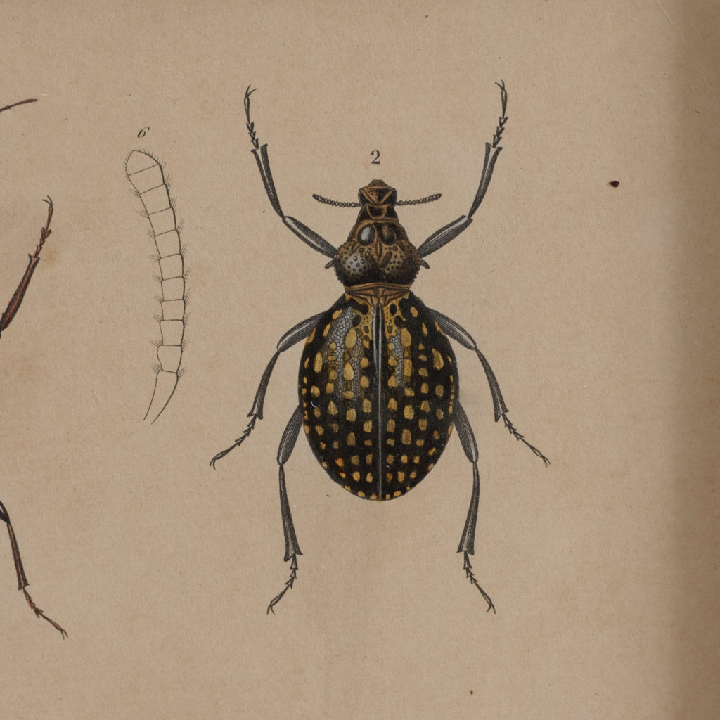 Original engravings of Insects published c1845-109726