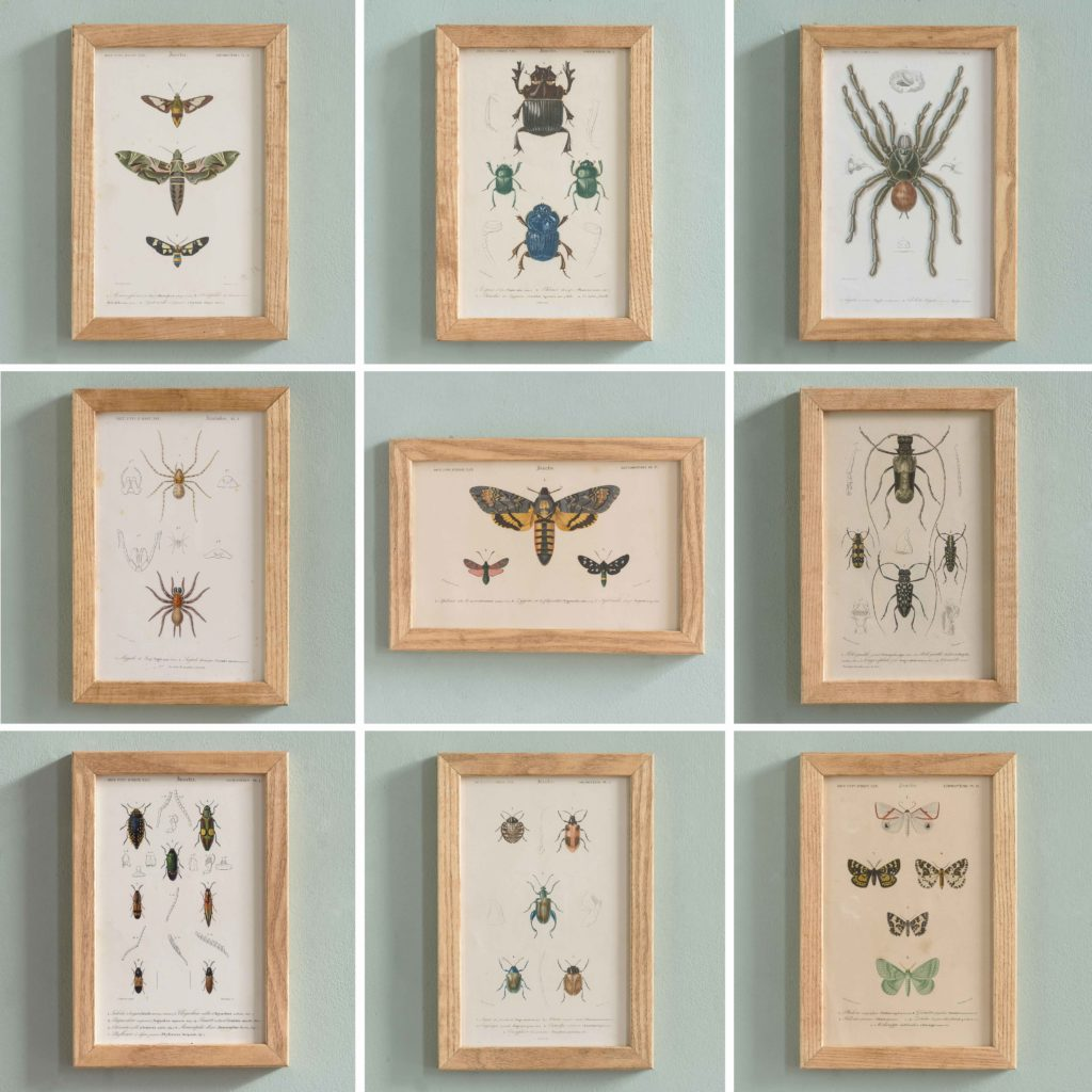 Original engravings of Insects published c1845-109713