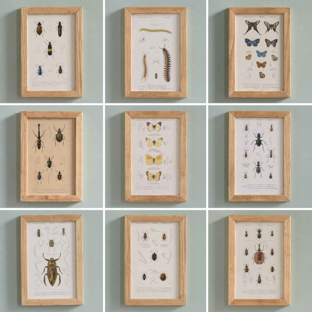 Original engravings of Insects published c1845-109734