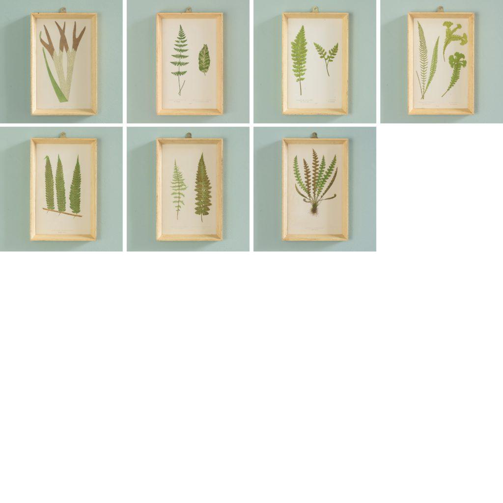 Ferns, 19th century scientific prints published c1867-110199