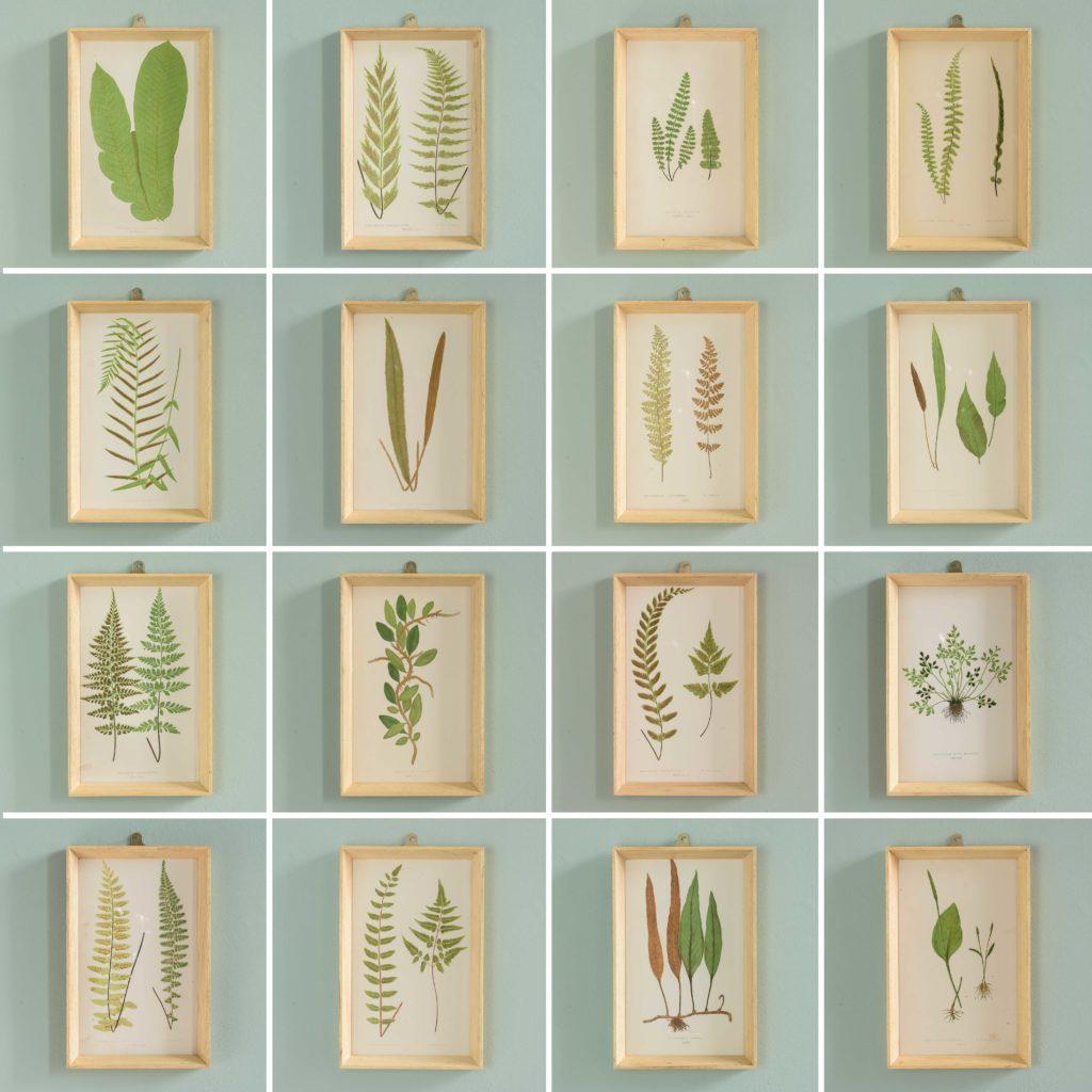Ferns, 19th century scientific prints published c1867-110198