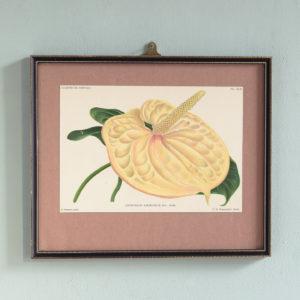 Dutch botanicals of household plants,-0
