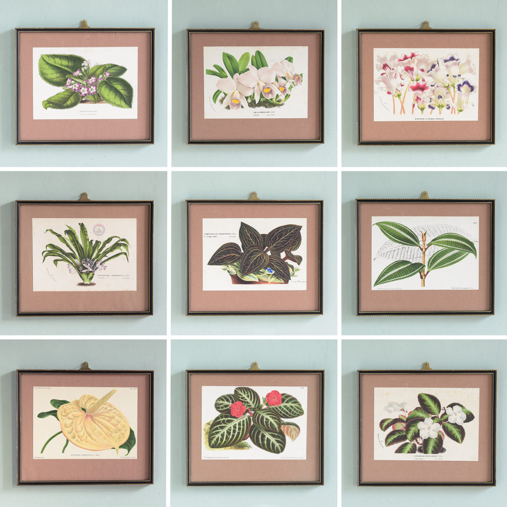 Dutch botanicals of household plants,-111355