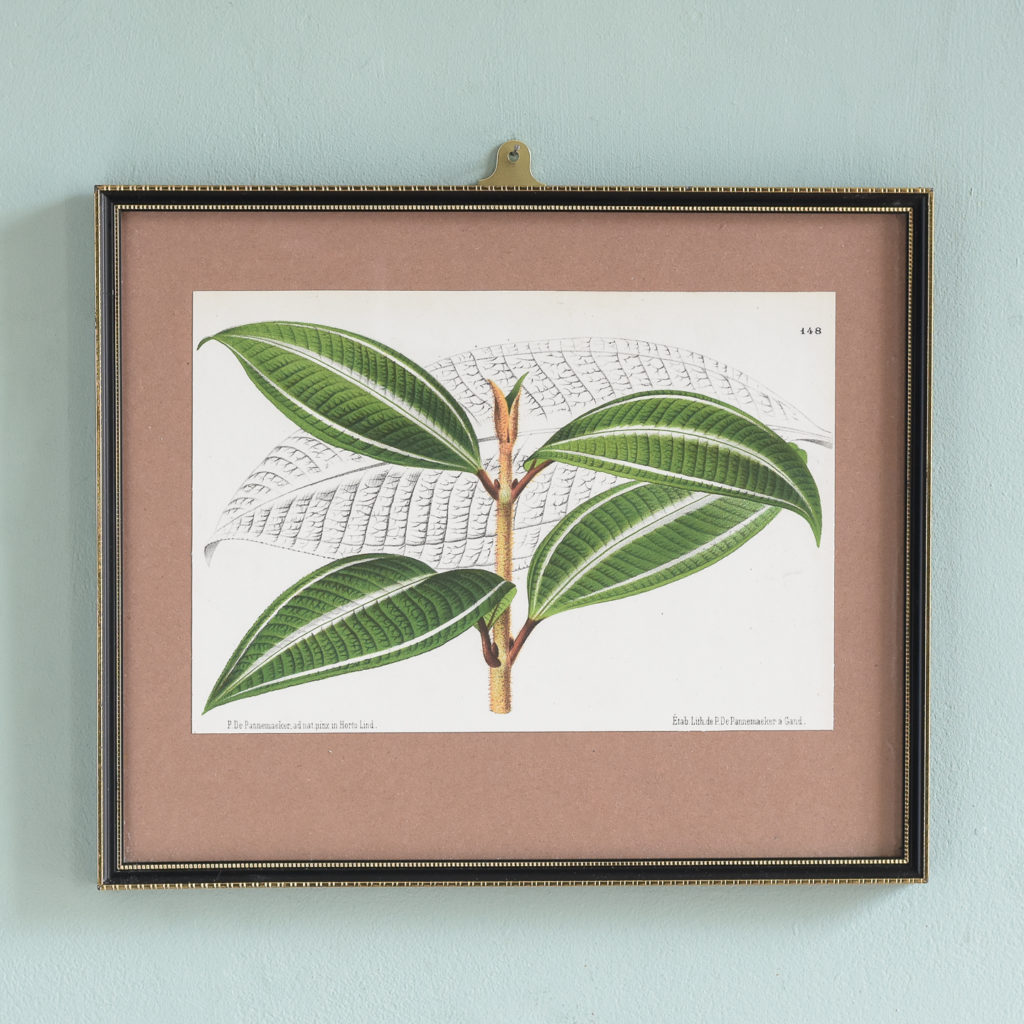 Dutch botanicals of household plants,-0