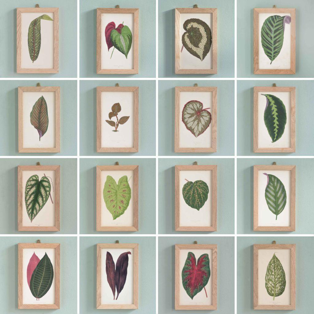Nineteenth century botanical scientific illustrations,-110771