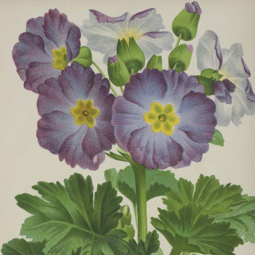 Linden botanicals,-111111