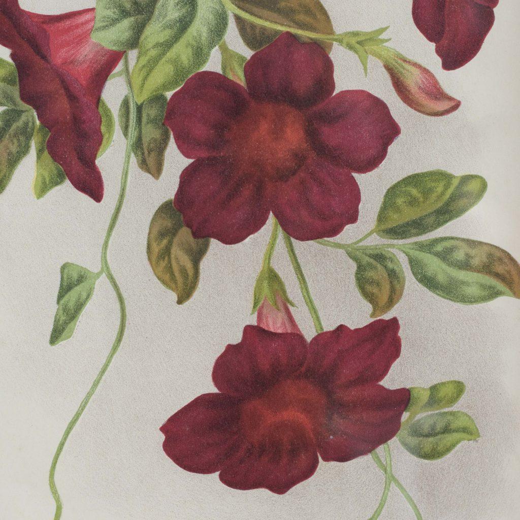 Linden botanicals,-111116