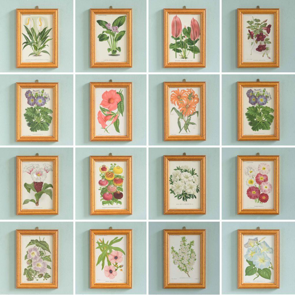 Linden botanicals,-111165