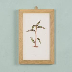 Nineteenth century botanical scientific illustrations,-0