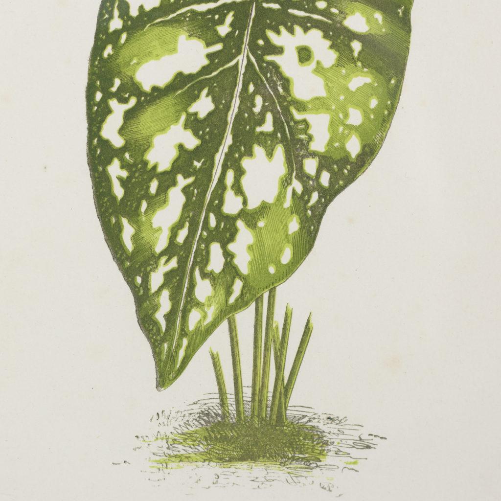 Nineteenth century botanical scientific illustrations,-113851