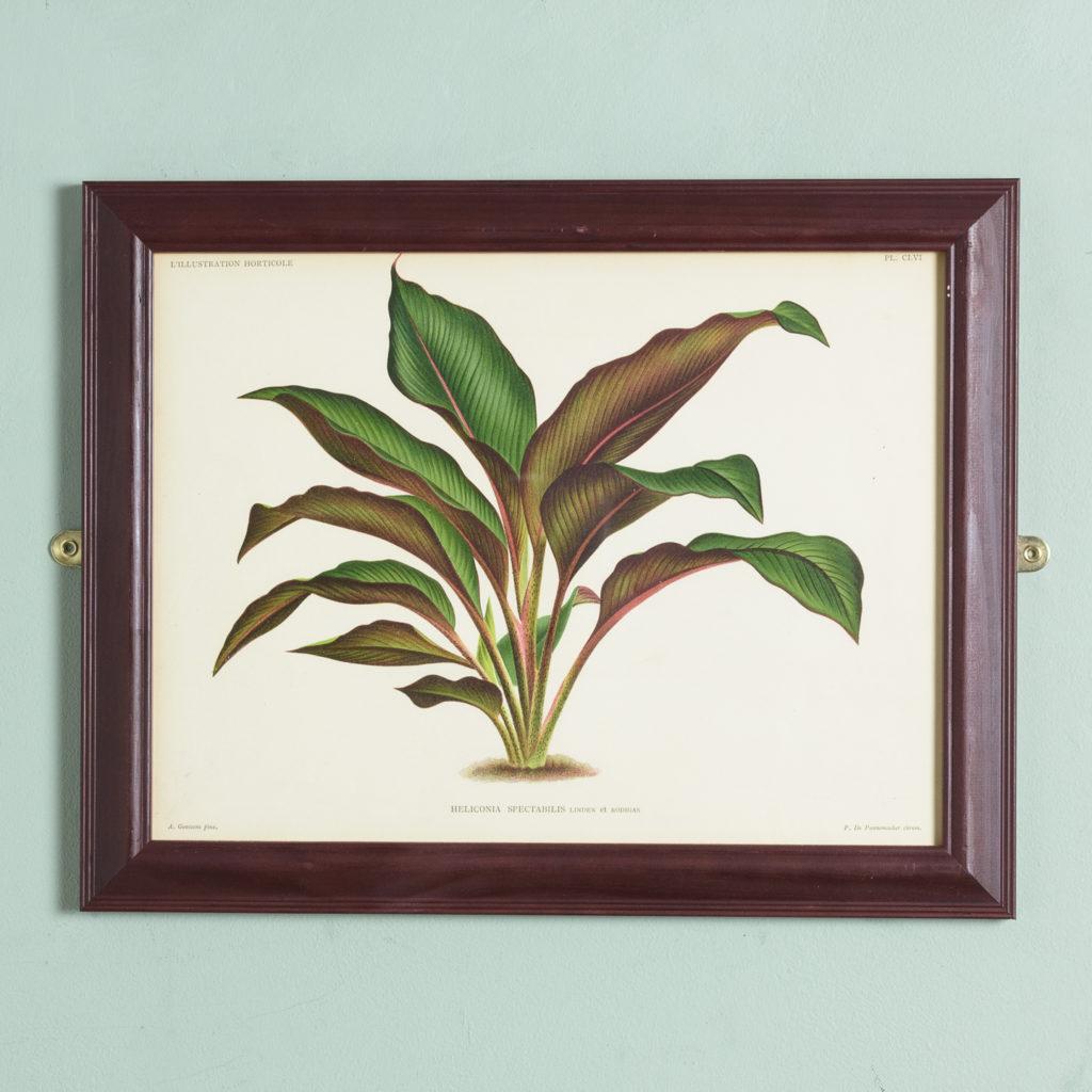 Original chromolithograph botanical prints,-0