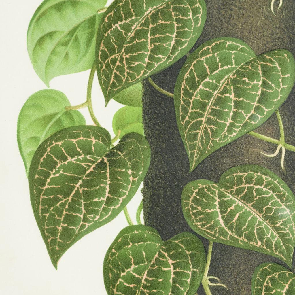 Original chromolithograph botanical prints,-113423