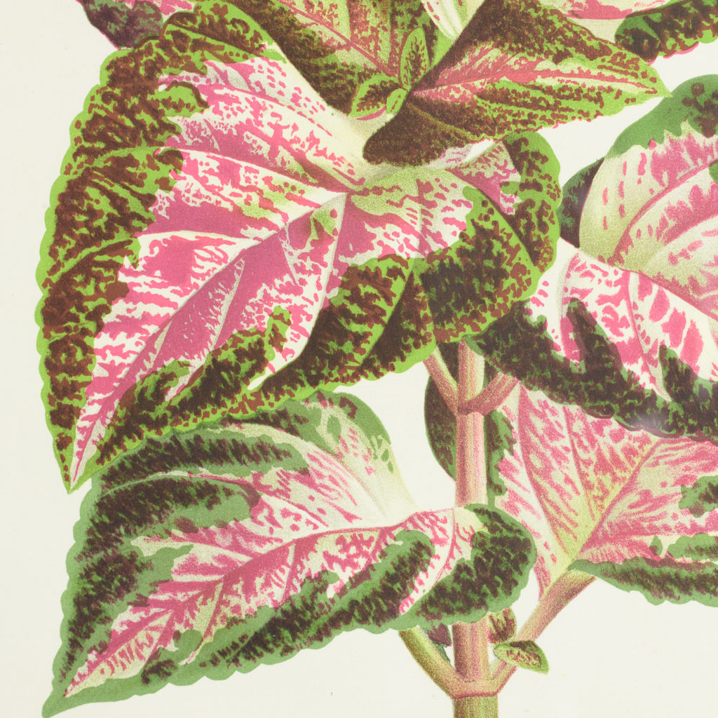 Original chromolithograph botanical prints,-113410