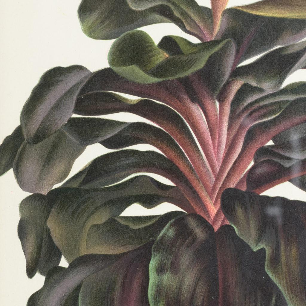 Original chromolithograph botanical prints,-113360