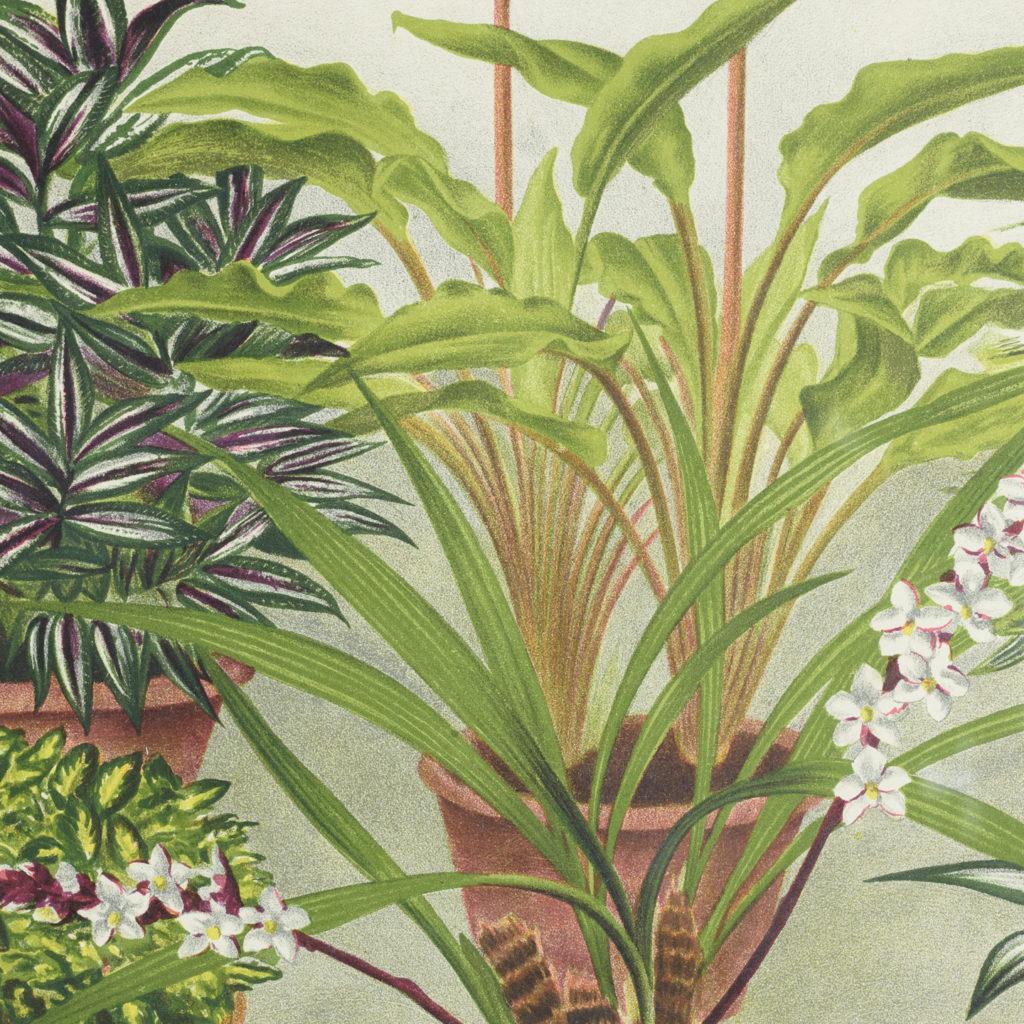 Original chromolithograph botanical prints,-113367