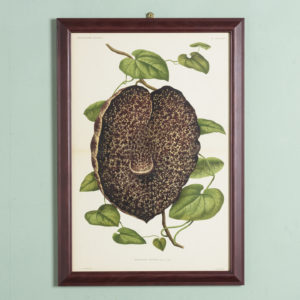 Original chromolithograph botanical prints,-0