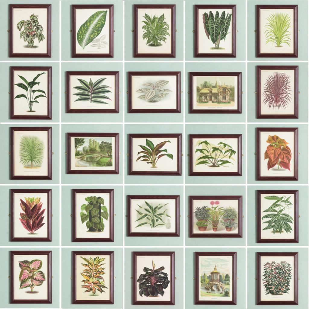 Original chromolithograph botanical prints,-113376