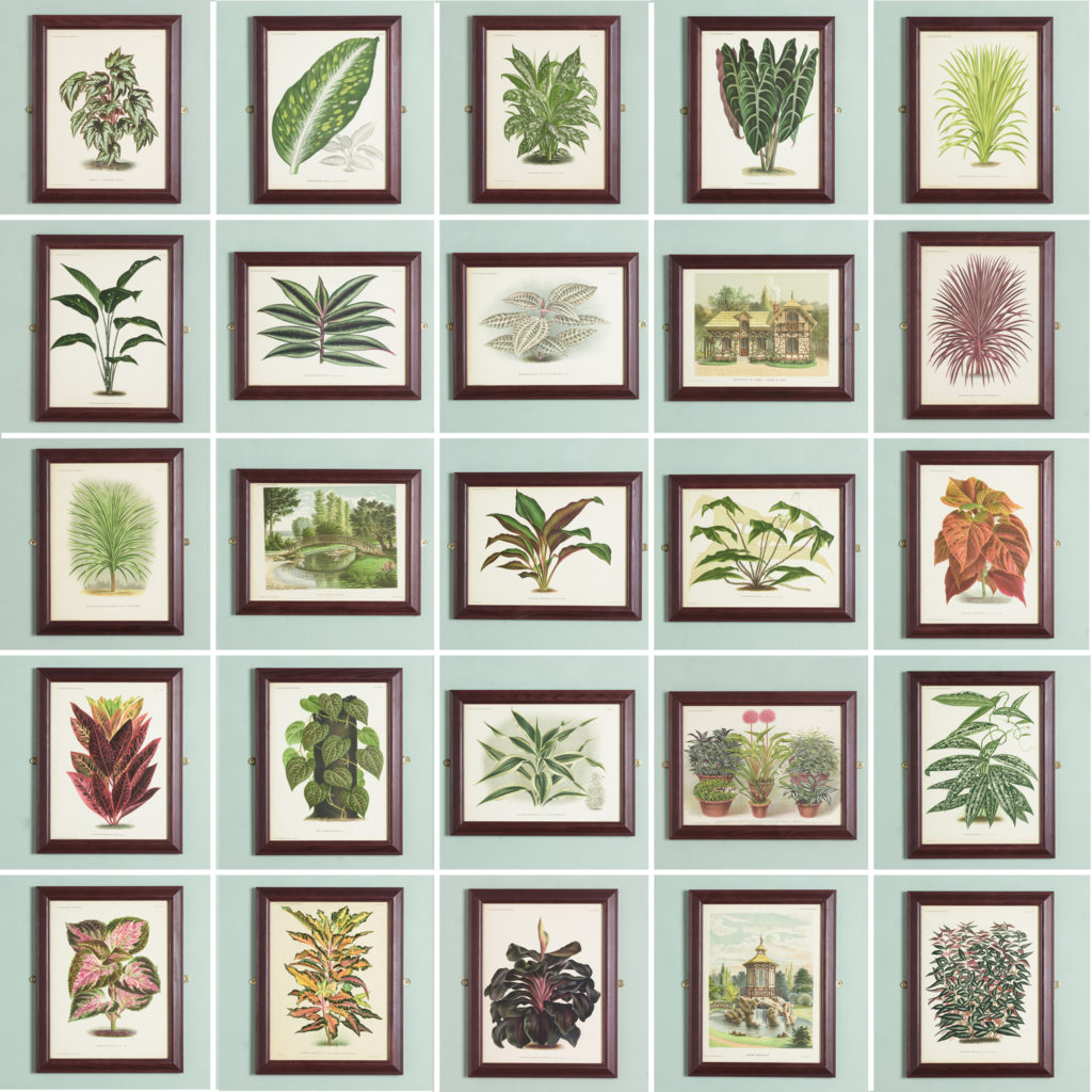 Original chromolithograph botanical prints,-113407