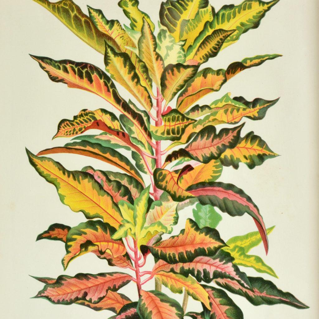 L'Illustration Horticole-114946