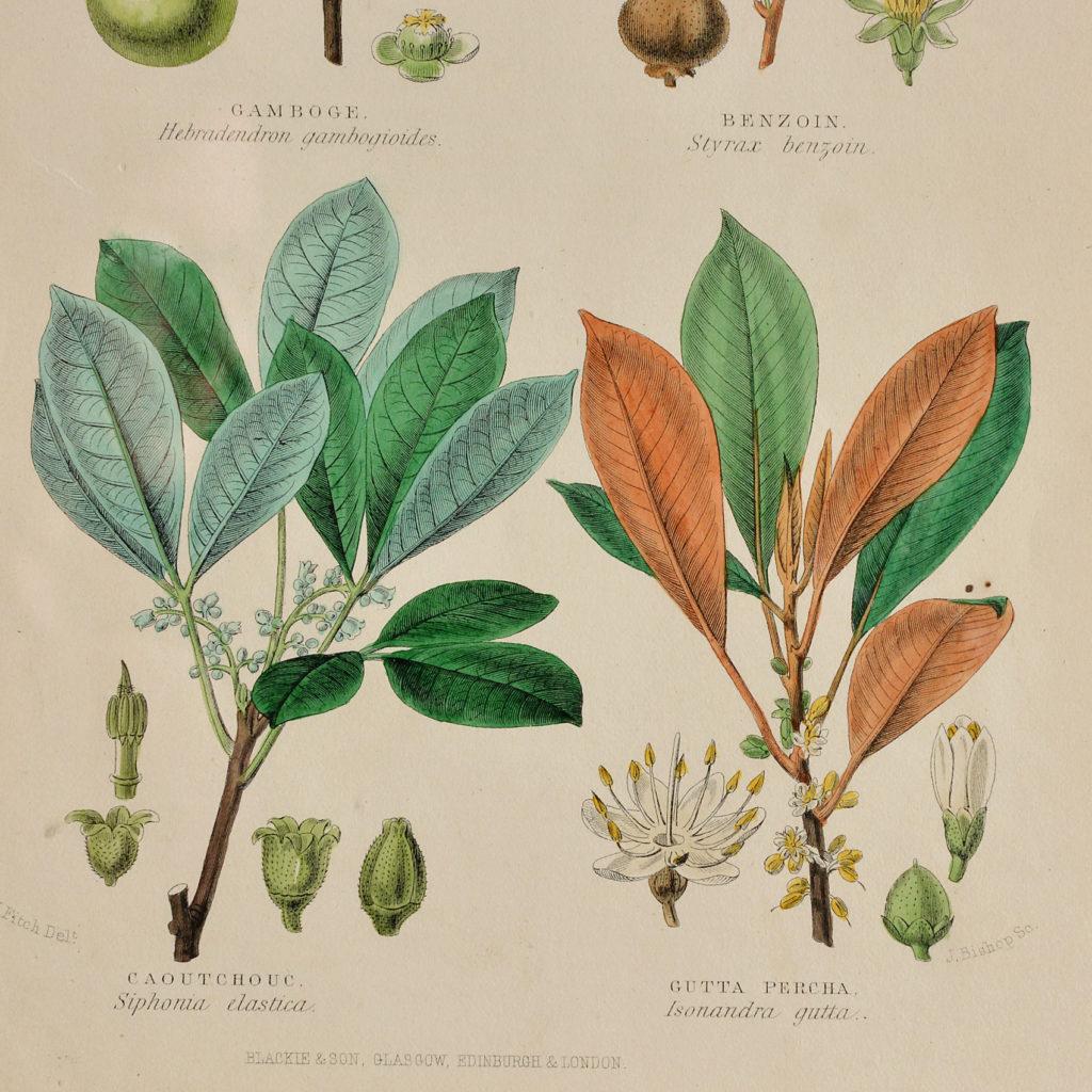 19th century Botanical prints,-114938