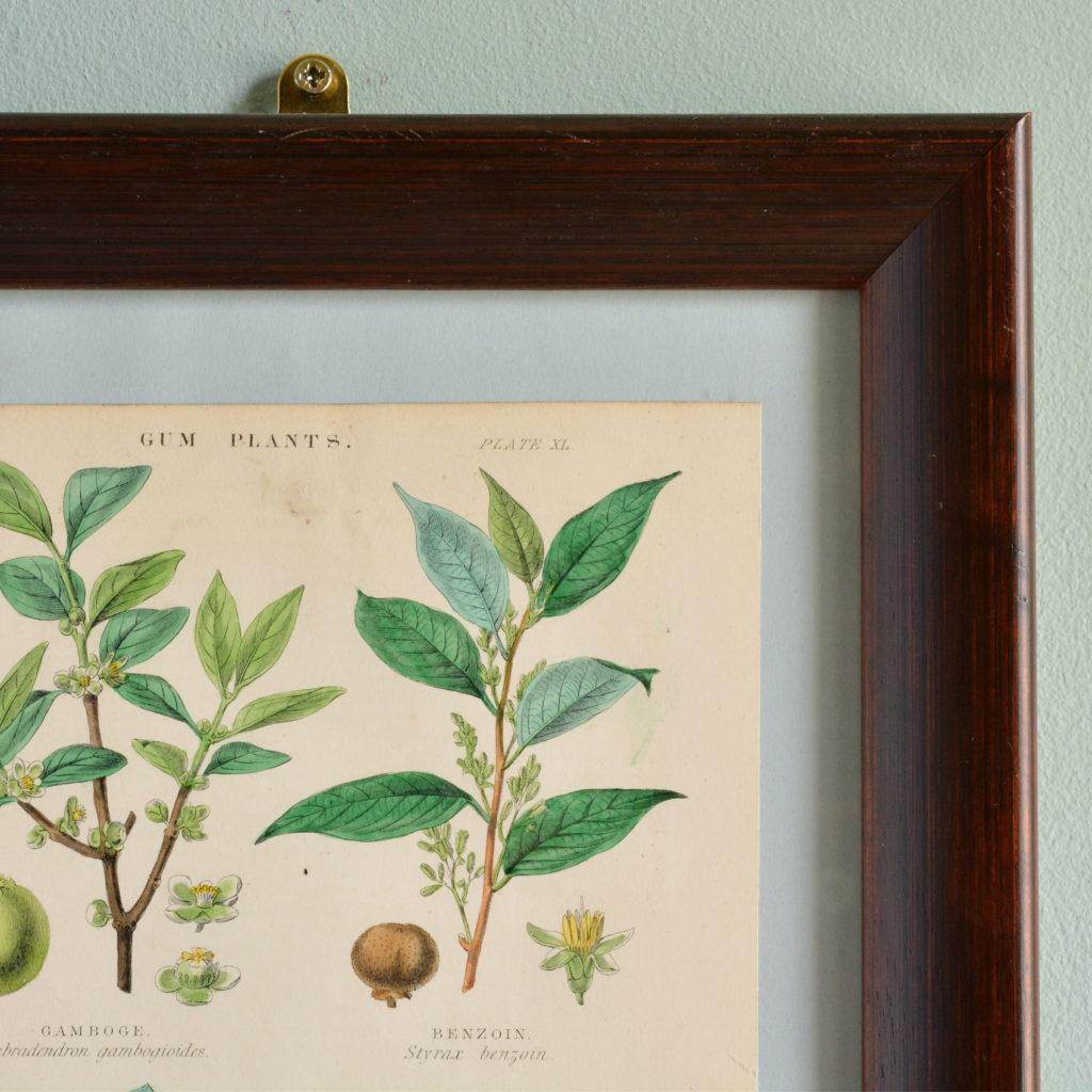 19th century Botanical prints,-114936