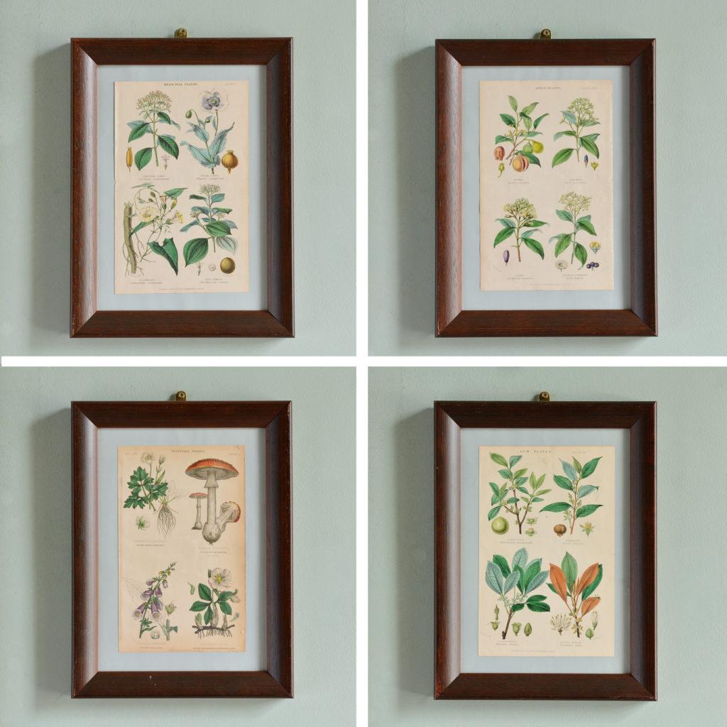Botanical engravings
