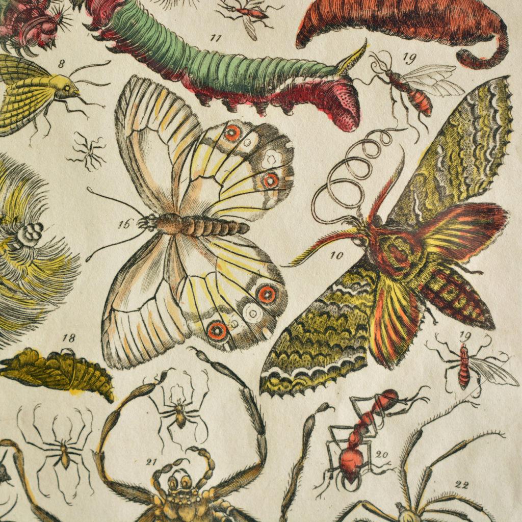 The Natural History of Carolina, Florida, and the Bahama Islands, by Mark Catesby c1750-114969