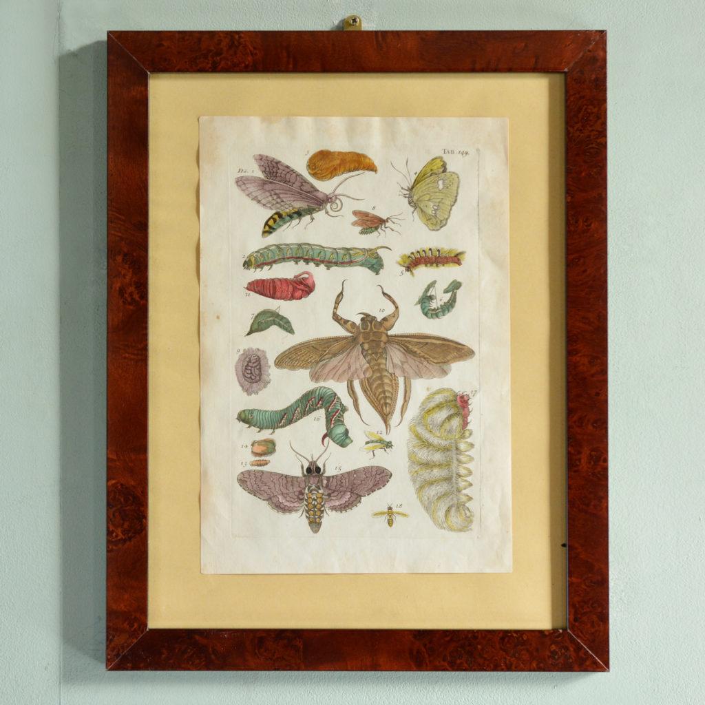 The Natural History of Carolina, Florida, and the Bahama Islands, by Mark Catesby c1750-0