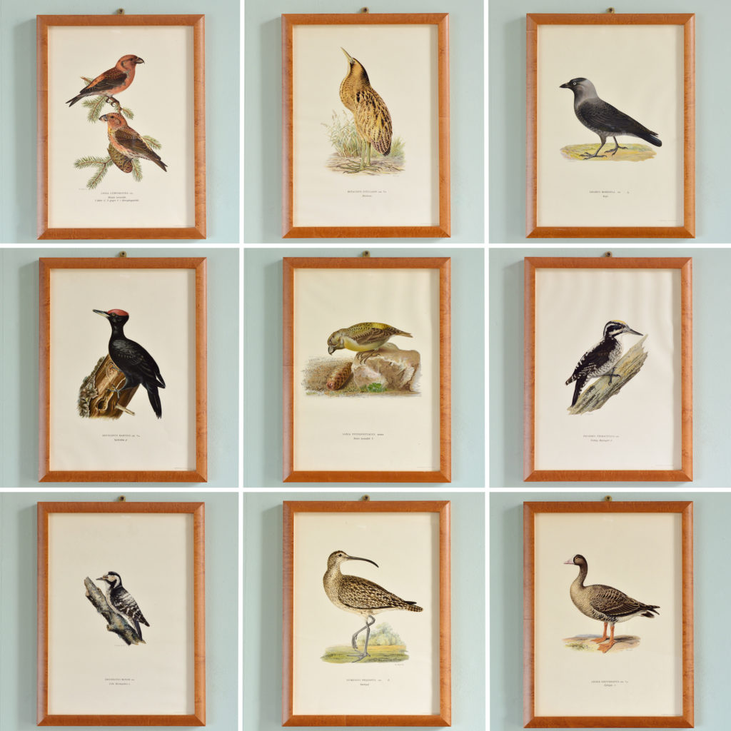 Swedish Birds (Svenska fåglar, efter naturen och på sten ritade)-114838