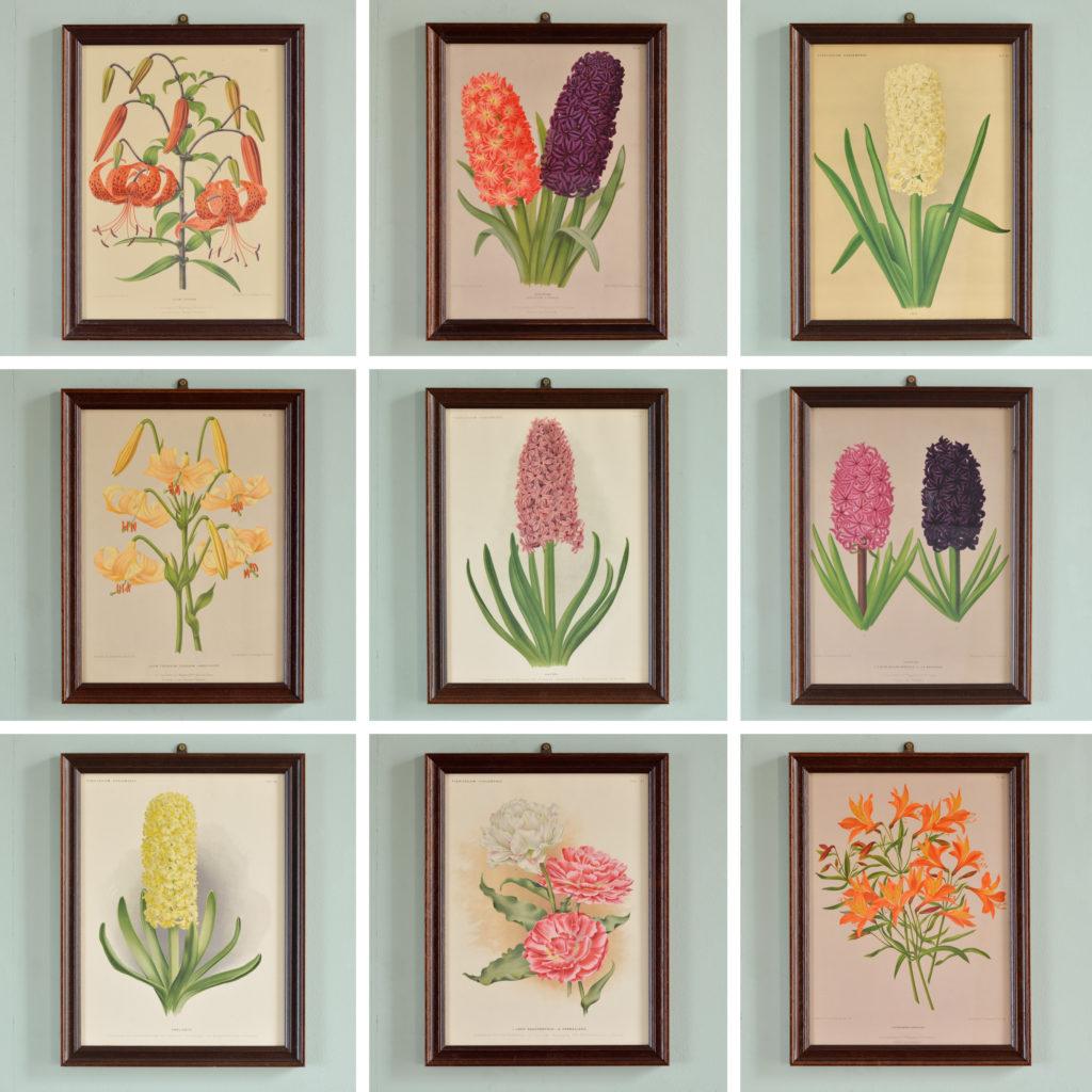 Chromolithograph prints by A. C. van Eeden & Co.