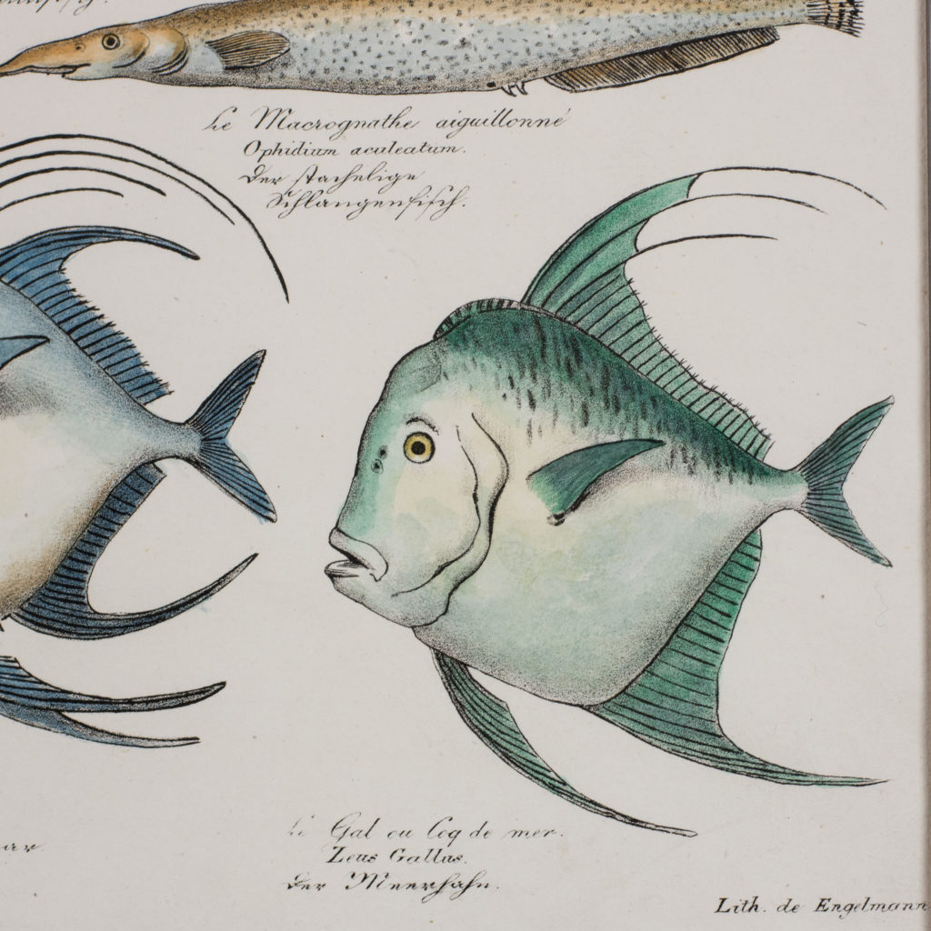 Poissons, original engraving from the 1840's-114814