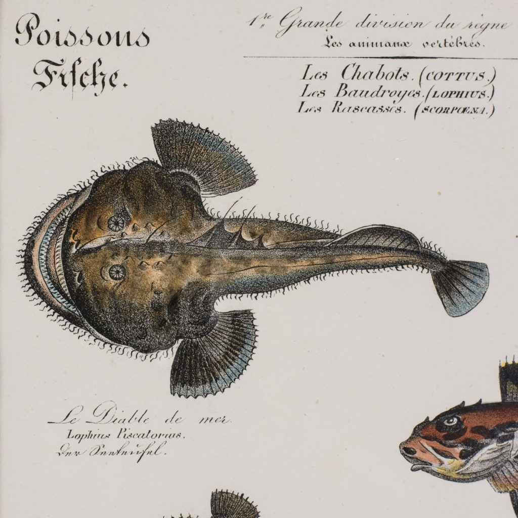 Poissons, original engraving from the 1840's-114807
