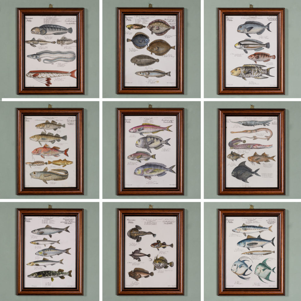 Poissons, original engraving from the 1840's-114809