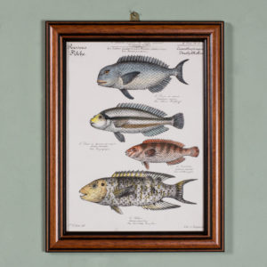 Poissons, original engraving from the 1840's-0