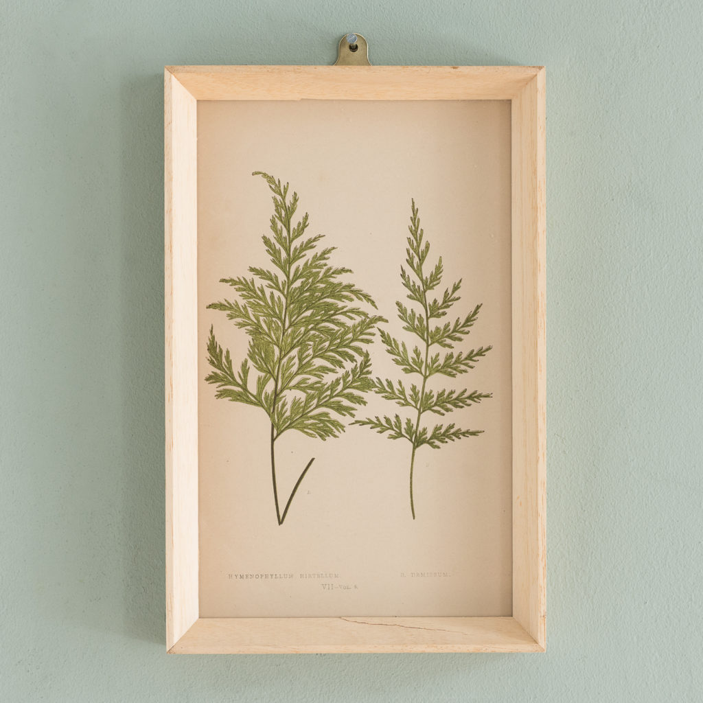 Ferns, 19th century scientific prints published c1867-0