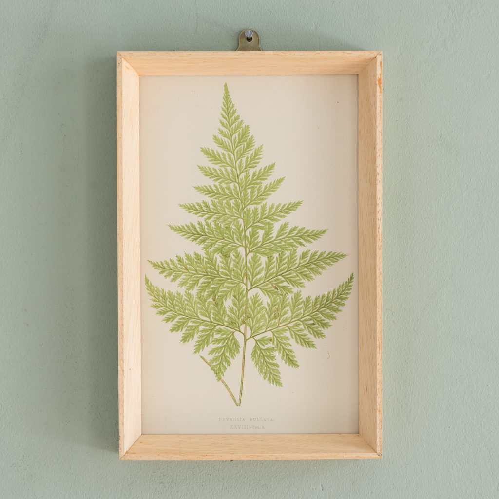 Ferns, 19th century scientific prints published c1867-0