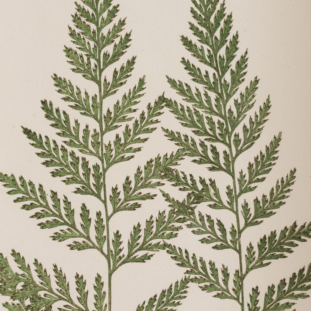 Ferns, 19th century scientific prints published c1867-114692