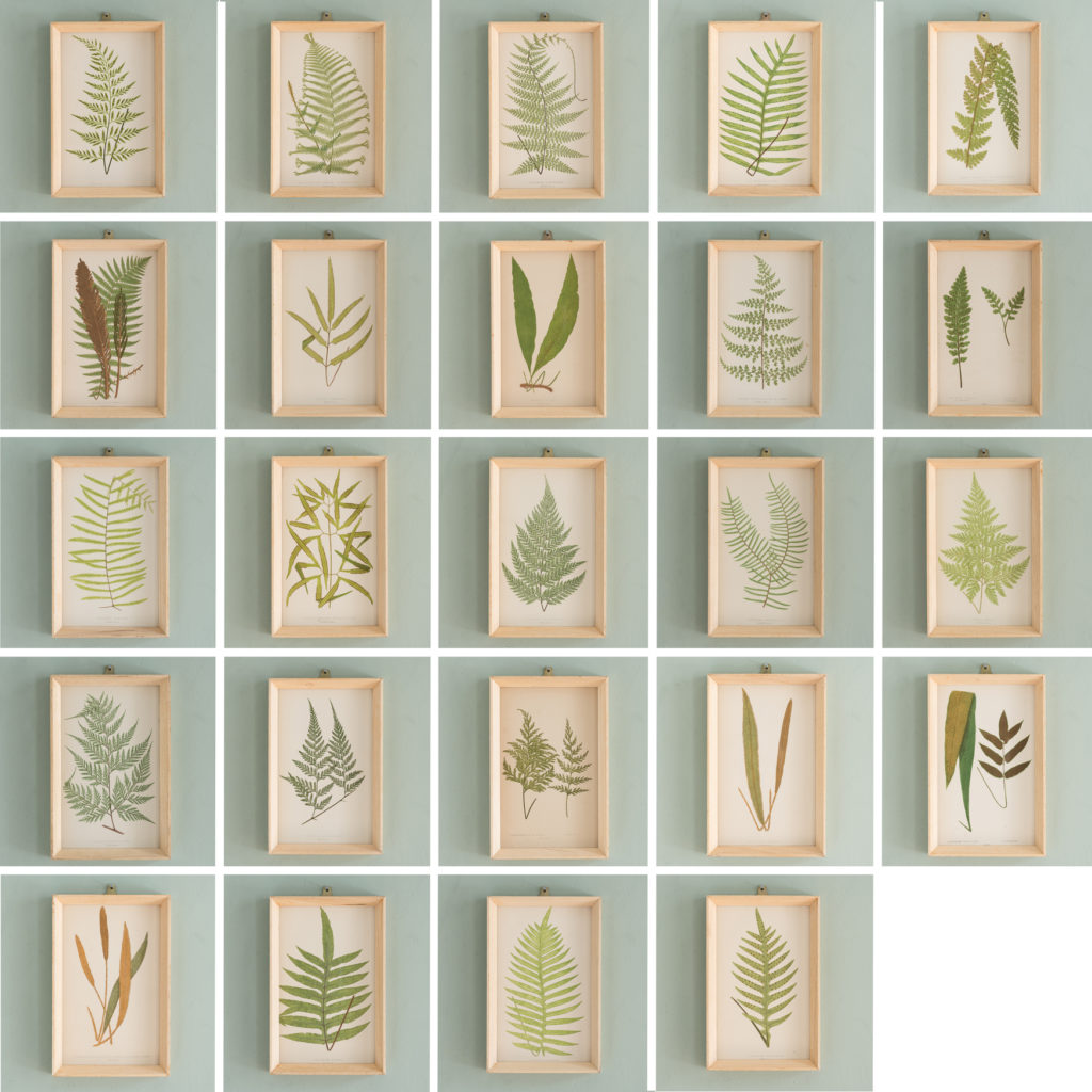 Ferns, 19th century scientific prints published c1867-114619
