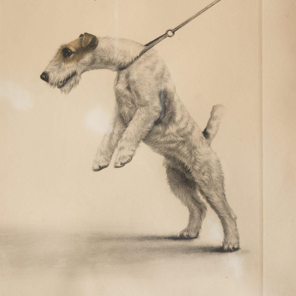 Original aquatint of Two Fox Terriers-116352