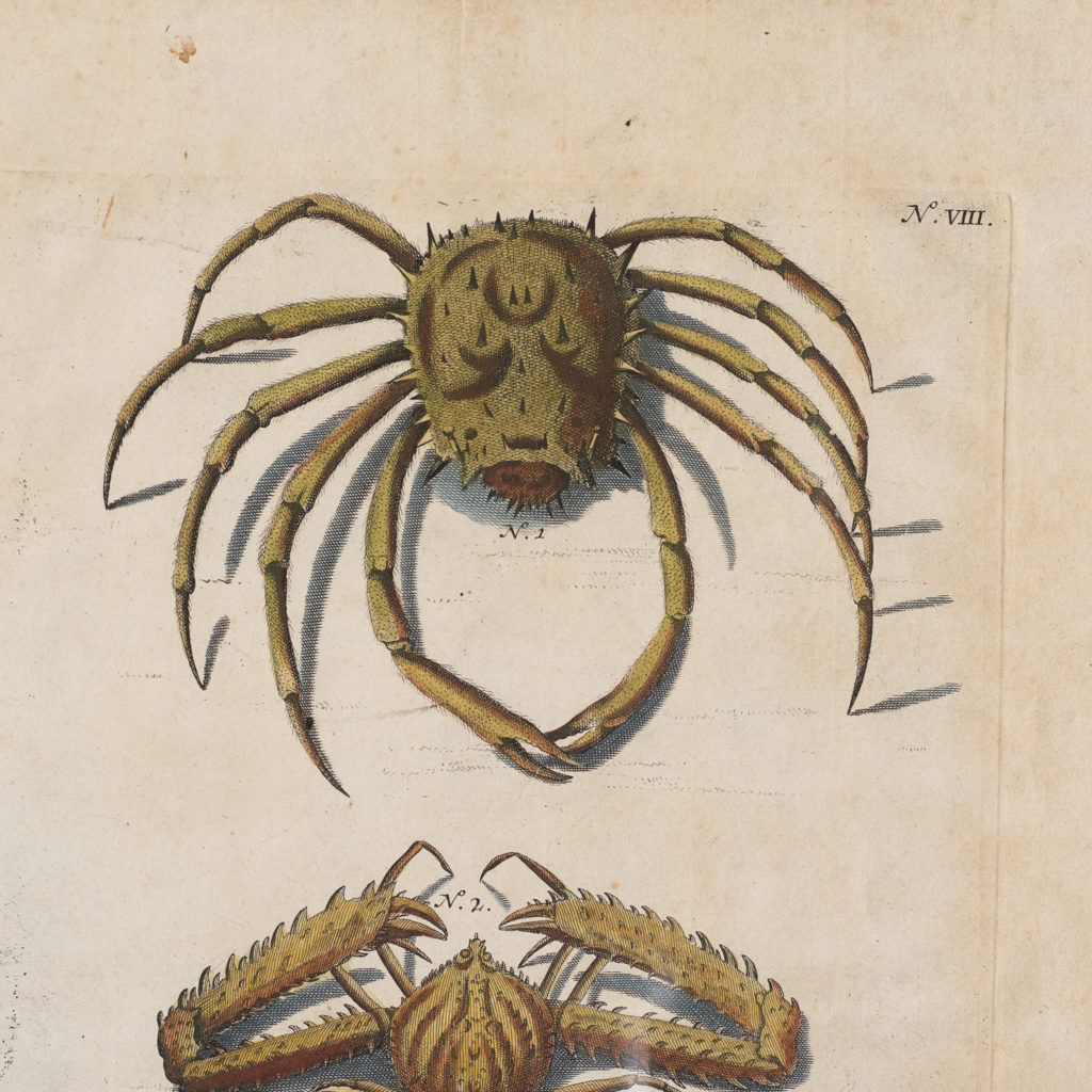 Original 18th Century engraving of Shells and Crustaceans, in old hand-colour.-117489