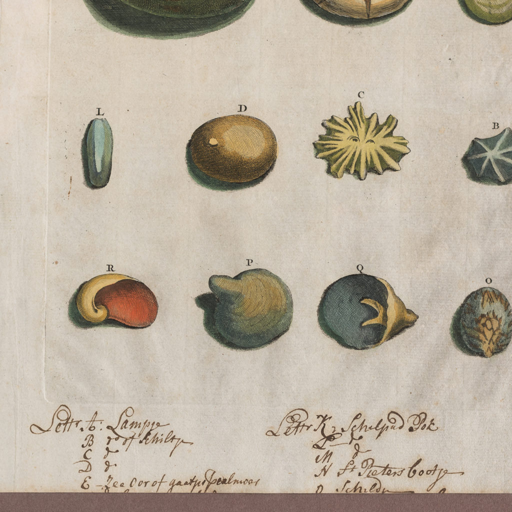 Original 18th Century engraving of Shells and Crustaceans, in old hand-colour.-117478