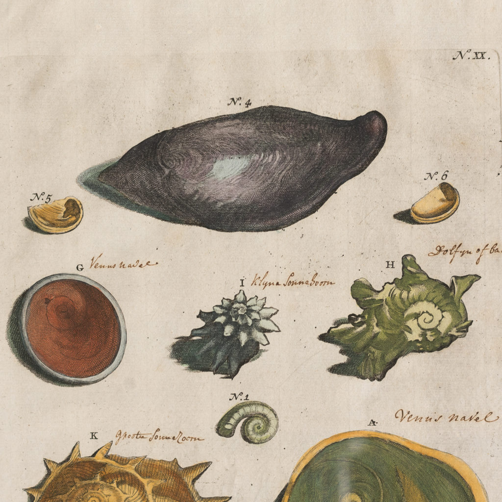 Original 18th Century engraving of Shells and Crustaceans, in old hand-colour.-117466