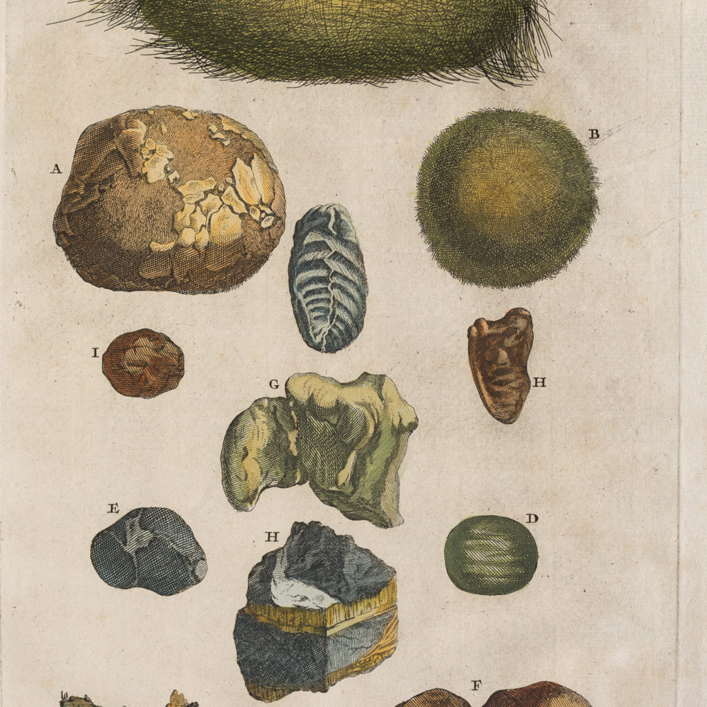 Original 18th Century engraving of Shells and Crustaceans, in old hand-colour.-117459