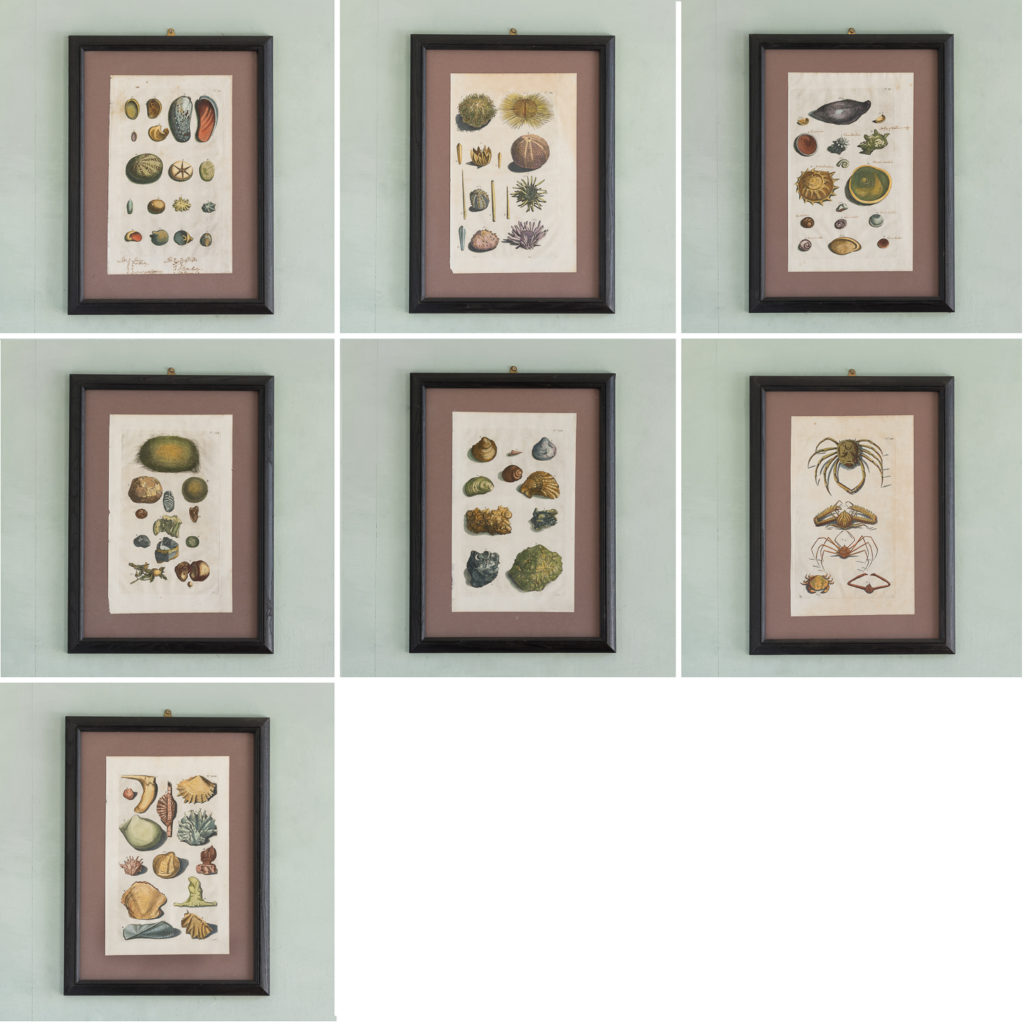Original 18th Century engraving of Shells and Crustaceans, in old hand-colour.-117467