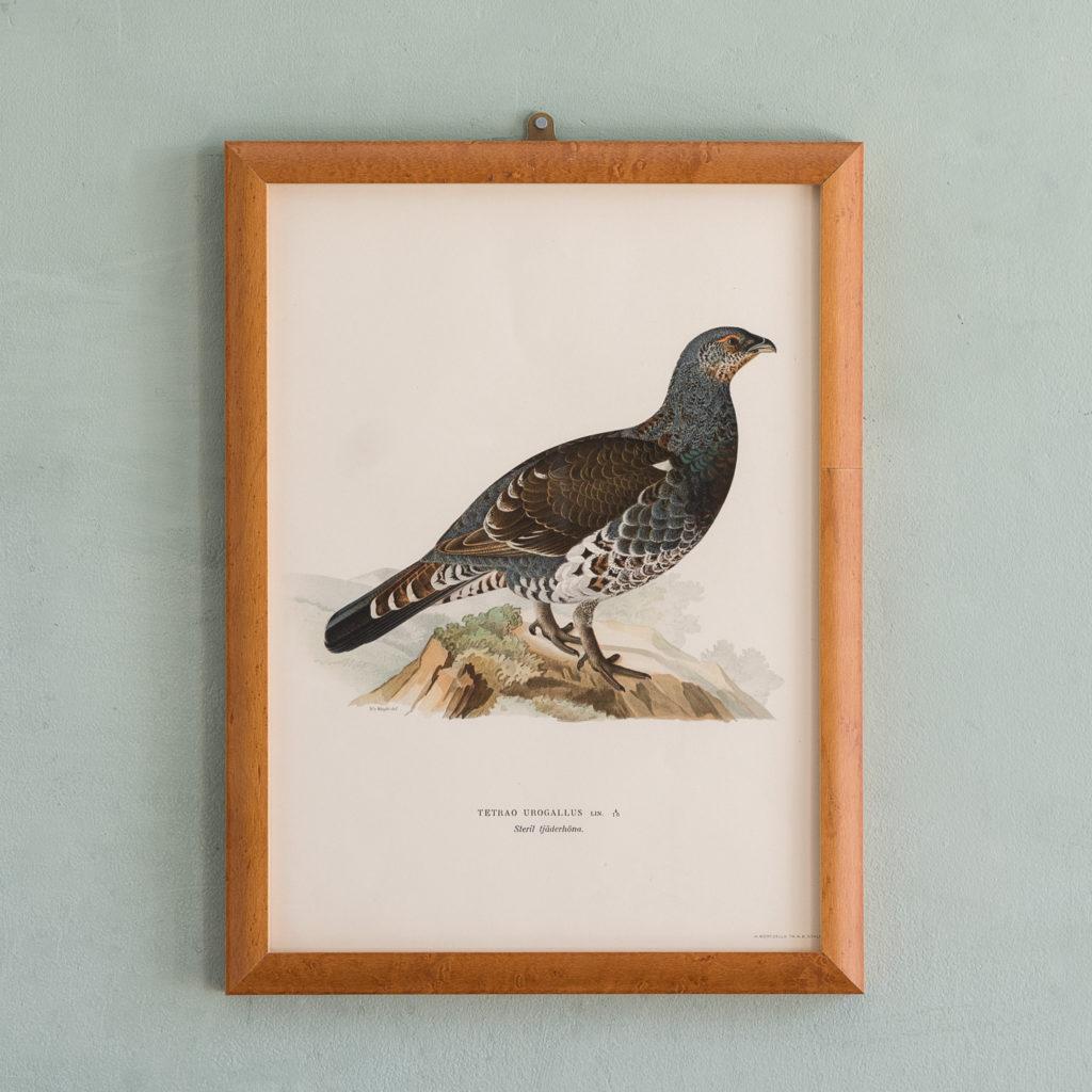 Swedish Birds (Svenska fåglar, efter naturen och på sten ritade)-0